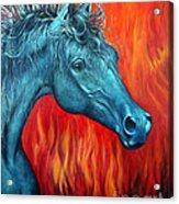 Equus Diabolus Diablo Acrylic Print