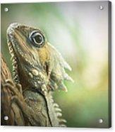 Eric The Lizard Acrylic Print