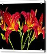Erotic Red Flower Selection Romantic Lovely Valentine's Day Print Acrylic Print