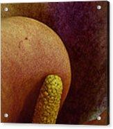 Erotica Acrylic Print
