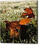Essence Of Autumn Acrylic Print