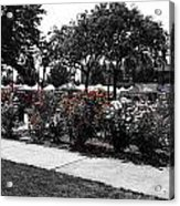 Esther Short Park Rose Garden Acrylic Print