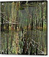 Estuaries Edge Acrylic Print