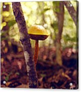 Et  The Shy Mushroom Acrylic Print by   Joe Beasley