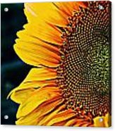 Eternal Sun Acrylic Print