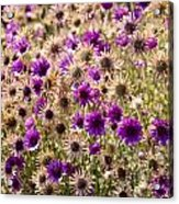 Eternity Flower Acrylic Print by Gerald Murray Photography