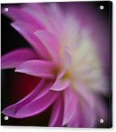 Ethereal Dahlia Acrylic Print