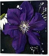 Etoile Violette - Clematis Acrylic Print