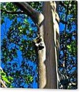 Eucalyptus Acrylic Print