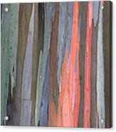 Eucalyptus Tree Bark Acrylic Print