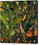 Eugene and Evans' Banana Tree Acrylic Print