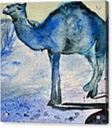 Even Camels Get The Blues Acrylic Print