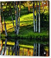 Evening Birches Painted Acrylic Print