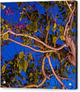 Evening Blues Acrylic Print
