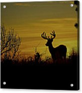 Evening Buck Acrylic Print