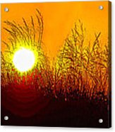 Evening Dunes Acrylic Print