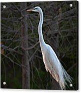 Evening Egret 2 Vertical Acrylic Print