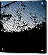 Evening Fence Acrylic Print
