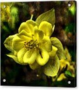 Evening Floral Acrylic Print