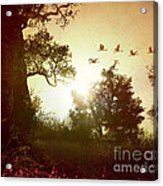Evening Flying Geese Acrylic Print