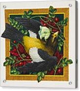 Evening Grosbeak Acrylic Print