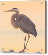Evening Heron - Colorful Pastel Acrylic Print