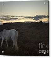 Evening In New Forest Acrylic Print