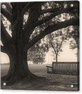 Evening Swing - Oak Tree - Altus Arkansas Acrylic Print