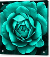 Evening Teal Rose Flower Acrylic Print