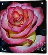 Event Rose Too Acrylic Print