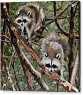 Everglade Babies Acrylic Print