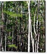 Everglade Magic Acrylic Print