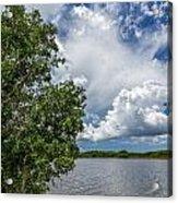 Everglades 0266 Acrylic Print