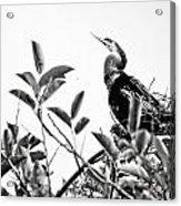 Everglades 20 Acrylic Print