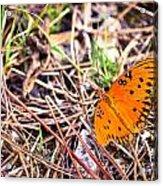 Everglades 6 Acrylic Print
