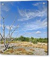 Everglades Coastal Prairies Acrylic Print