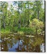 Everglades Lake Acrylic Print