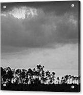 Everglades No.5  Acrylic Print
