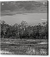 Everglades Panorama Bw Acrylic Print