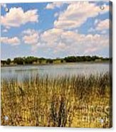 Everglades Pond Acrylic Print