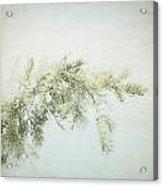 Evergreen - Square Acrylic Print