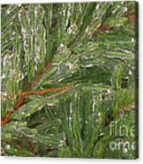 Evergreen Covered In Ice Acrylic Print
