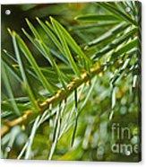 Evergreen Dream By Jrr Acrylic Print