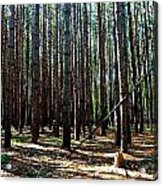 Evergreen Forest Acrylic Print