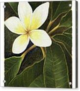 Everywhere In Hawaii Acrylic Print by Nancy Edwards