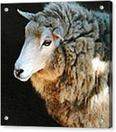 Ewe Are So Beautiful Acrylic Print