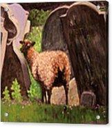 Ewe Spooked? Acrylic Print