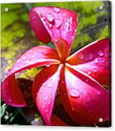 Exotic Beauty Acrylic Print