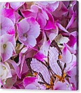 Exotic Butterfly On Hydrangea Acrylic Print