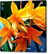 Exotic Orange Acrylic Print